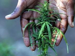 В Волгоградской области полицейские  изъяли самую крупную за год партию марихуаны