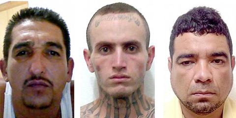 Слева: Рохелио Франко (Эль Тайсон); Серхио Бельтран (Эль Скар); Педро Циснерос (Эль Питер)