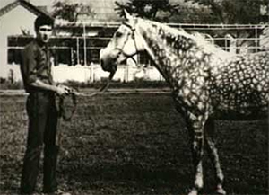 Головкин очень любил работать с лошадьми