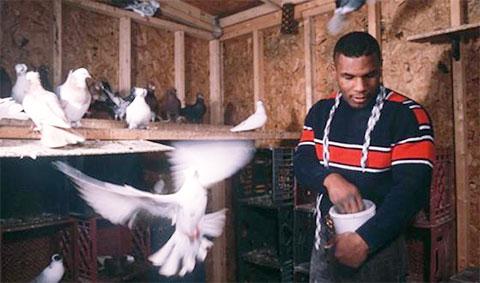 У Майка Тайсона с детства любовь к голубям