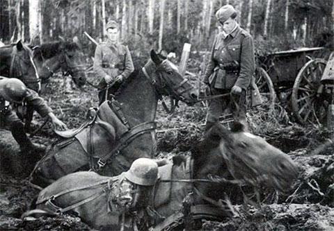 Немецкая армия в Новгородской области - лошади увязли по брюхо