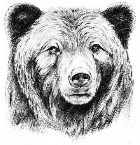 Эскиз для тату голова медведя