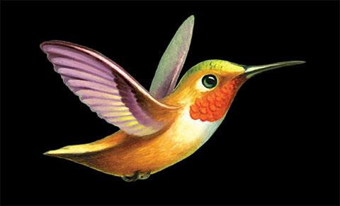 Цветной эскиз колибри для тату