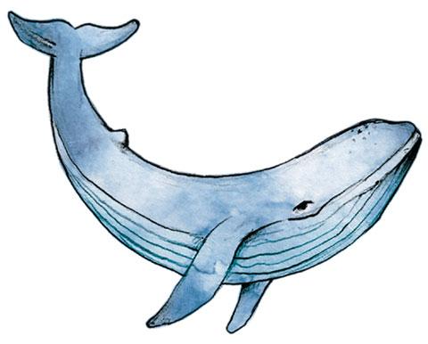 Эскиз кита для тату