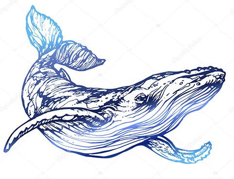 Тату кит - эскиз цветная