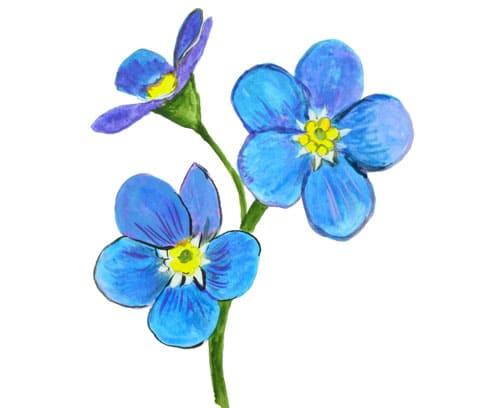 Цветы незабудки - эскиз для тату