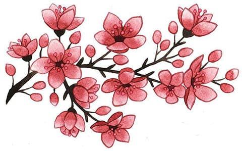 Эскиз сакуры с ветвями для татуировки