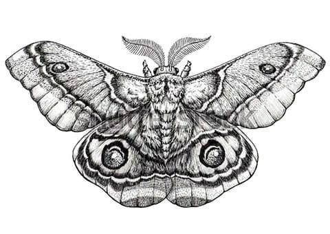 Эскиз для татуировки в стиле дотворк
