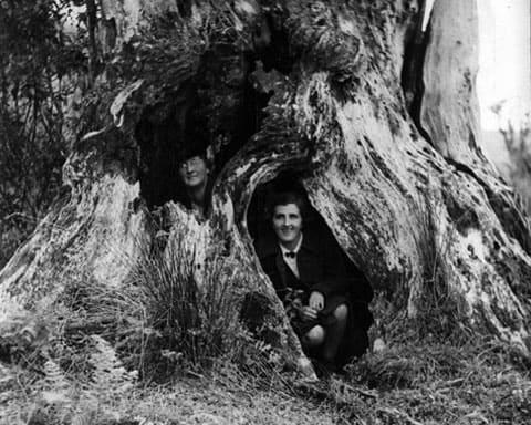 Пень, в котором долгое время прятался Стэнли Грэм от полиции