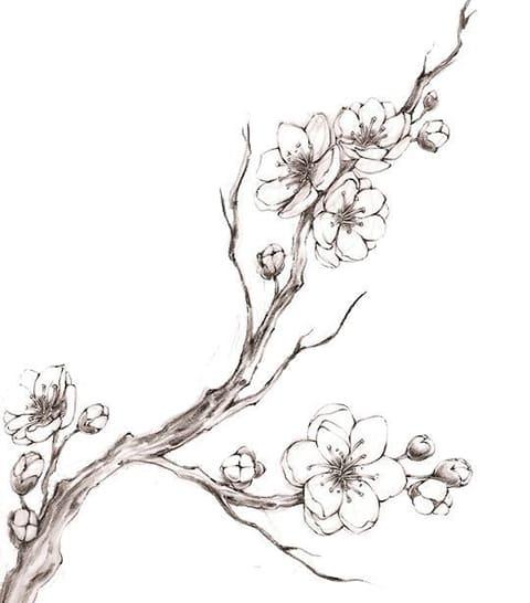 Эскиз ветки сакуры для тату