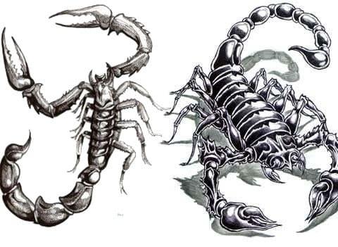 Эскизы скорпионов для тату