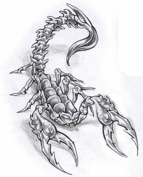 Эскиз для татуировки скорпион