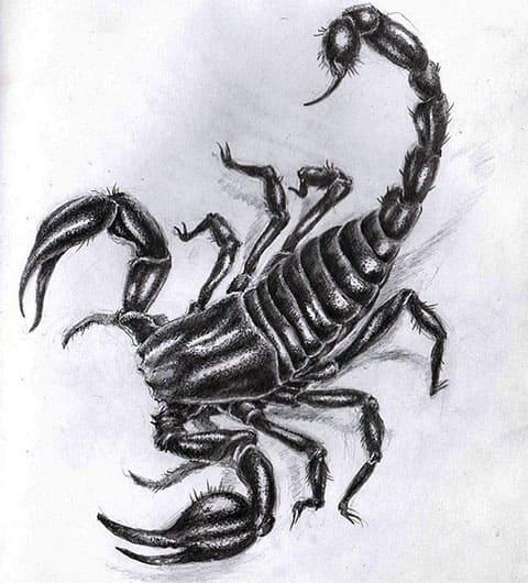 Эскиз для тату скорпион