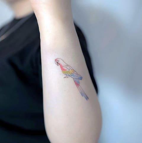Маленькая тату с попугаем у девушки