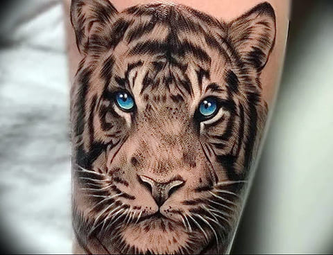 Тату голова тигра с голубыми глазами