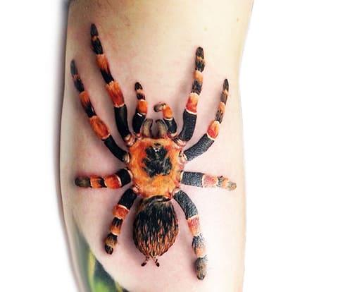 Цветная татуировка с тарантулом