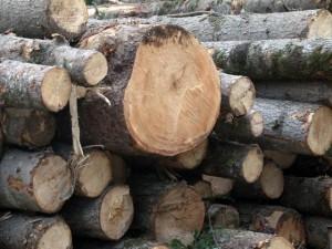 В Приморье продолжают воровать лес