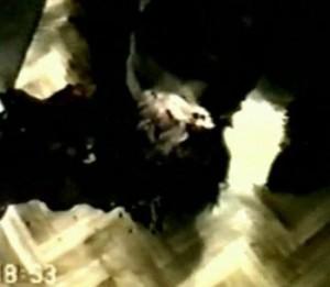 Гарри Купеева застрелили в квартире, адрес которой знал лишь узкий круг