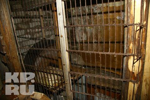 """В этой клетке осужденные и держали """"рабов"""". Следователи изъяли электрошок «Скорпион», наручники, три ружья, кинжал, мачете бразильское с клеймом, складную дубинку и четыре ножа. Фото: Роман ИГНАТЬЕВ"""