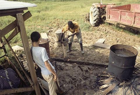 """Участники """"Народного Храма"""" работают на арендованной земле в Гайане"""