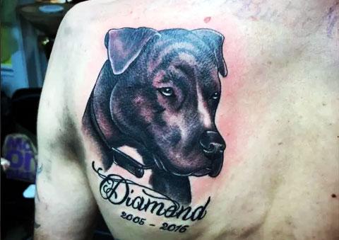 Татуировка питбуля на лопатке как дань уважения к своему умершему питомцу