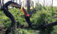 Медведицкая гряда — аномальная зона